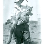 fox_fire_farms_alberta_pet_lion